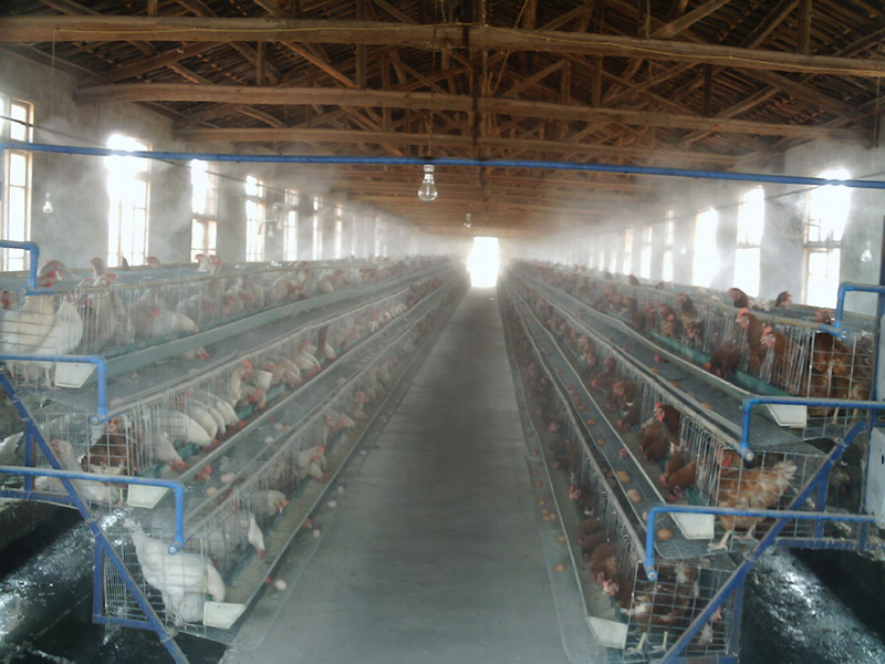 鸡舍喷雾消毒降温除味
